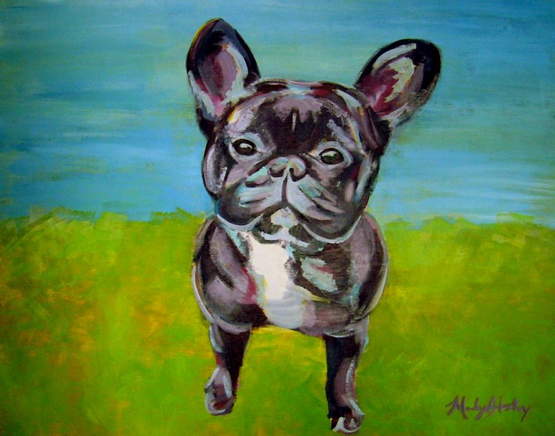 Kobe the French Bulldog